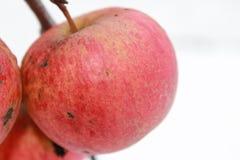 Jabłko na drzewie w jesieni Zdjęcia Stock