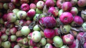 jabłko organiczne Obrazy Stock