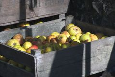jabłko skrzynka Obraz Royalty Free