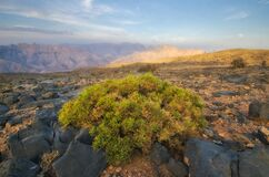 Jabal Shams Oman Royalty Free Stock Image