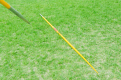 Jabalina en hierba verde Imagen de archivo libre de regalías