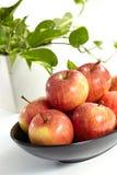jabłczana czerwień Zdjęcie Royalty Free