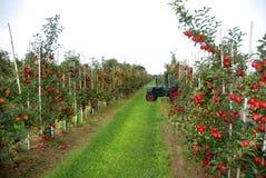 Jabłczany żniwo Fotografia Royalty Free