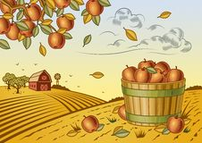 Jabłczany żniwo krajobraz Fotografia Stock