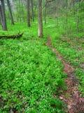 Jabłczany Rzeczny jaru stanu park Illinois Fotografia Stock
