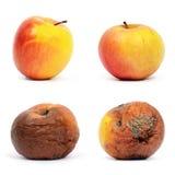jabłka przegniły zdrowy Fotografia Royalty Free