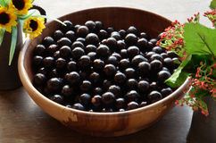 Jabuticaba Stock Photography