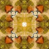 Jacana abstrakt 2 Zdjęcie Stock