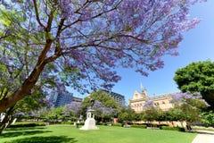 Jacaranda κοντά στο πανεπιστήμιο της Αδελαΐδα και το πανεπιστήμιο της Νότιας Αυστραλίας Στοκ Εικόνα