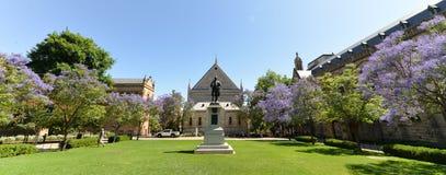 Jacaranda κοντά στο πανεπιστήμιο της Αδελαΐδα και το πανεπιστήμιο της Νότιας Αυστραλίας Στοκ Φωτογραφία