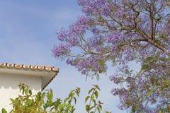 Jacaranda blossom. Jacaranda Tree and Spanish style house Stock Images