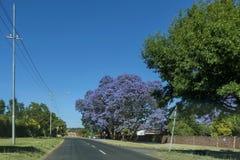 Jacaranda blossom in spring Royalty Free Stock Photography