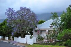 Jacaranda drzewa domu przylądek Południowa Afryka Zdjęcie Stock