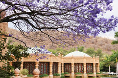 Jacaranda flowers in Spring,South Africa. Royalty Free Stock Image