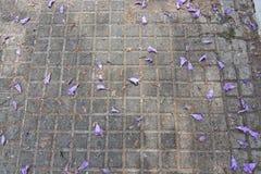 Jacaranda flowers in street Royalty Free Stock Photo