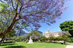 Jacaranda near university of Adelaide and univeristy of south australia. This sub-tropical tree native to South America has been planted widely in Adelaide Stock Image
