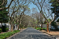 Jacaranda road Stock Photography