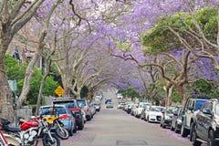Jacaranda street Royalty Free Stock Image