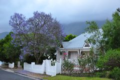 Jacaranda tree home Cape South Africa stock photo