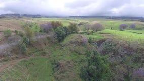 Jacaranda trees blooming on hill of huge field in Kula pastures on Maui island Hawaii aerial 4k drone panorama landscape. Jacaranda trees blooming on hill of stock video