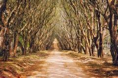 Jacaranda łuk zdjęcie royalty free