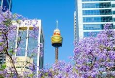 Jacarandas en la estación de primavera que florece adentro centro de la ciudad de Sydney con la vista de la torre icónica de Cent foto de archivo libre de regalías