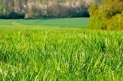 Jachère en herbe Photographie stock libre de droits