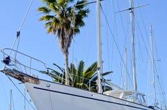 Jacht en palm Stock Afbeelding