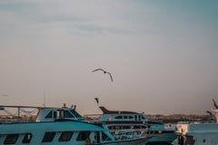 Jachten in de zeehaven bij zonsondergang worden gedokt die royalty-vrije stock afbeeldingen