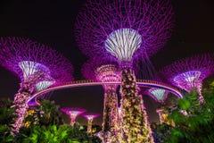 Jachthavenlaurierbomen bij Tuin door de baai Stock Foto's