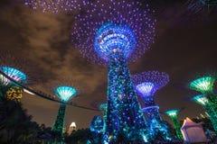 Jachthavenlaurierbomen bij Tuin door de baai Royalty-vrije Stock Afbeeldingen