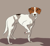 Jachthond Stock Illustratie