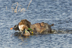Jachthond stock foto's