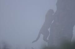 Jachtluipaard die een boom in de mist beklimmen Stock Fotografie