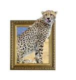 Jachtluipaard in kader met 3d effect Stock Afbeeldingen