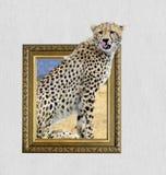 Jachtluipaard in kader met 3d effect Stock Foto