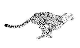 Jachtluipaard lopende die striker in inkt met de hand wordt getrokken stock illustratie