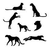 Jachtluipaard vastgestelde vector Stock Afbeeldingen