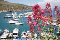Jachtu klub z kwiatem Zdjęcie Stock
