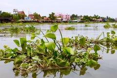 Jacinthe d'eau Photographie stock libre de droits