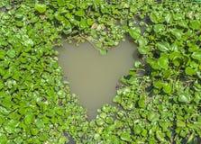 Jacinthe d'eau dans la forme de coeur Image libre de droits