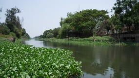 Jacinthe d'eau sur le canal Photos libres de droits