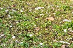 Jacinthe et déchets d'eau en rivière photo libre de droits
