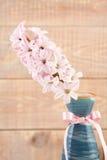 Jacinthe rose dans le vase avec le ruban image libre de droits