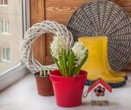 Jacinthes blanches dans un pot rouge Photographie stock libre de droits