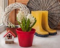 Jacinthes blanches dans un pot rouge Photo stock