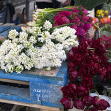 Jacinthes blanches et roses Images stock