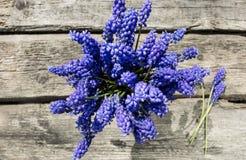 Jacinthes de bouquet dans un cadeau Images stock