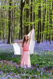 Jacinthes des bois féeriques Photo stock