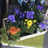 Jacinthes et ranunculus dans des pots à vendre Photo libre de droits